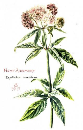 Example of medicinal herbs collected by the girls
