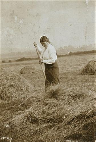 Girl helping local farmers with haymaking, 1915  LF310-69